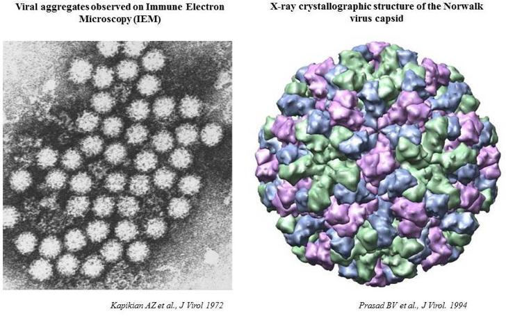 norwalk virus contagious